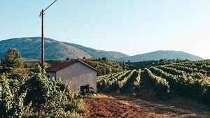 Image principale de l'article Voyage: la Grèce à travers ses vignobles