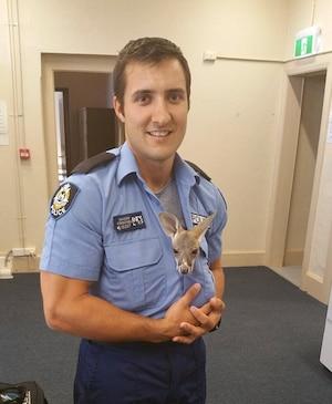 On craque: un policier adopte un bébé kangourou.