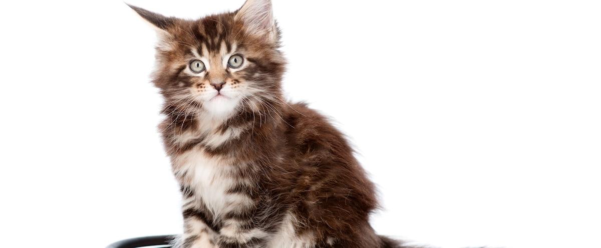 des produits toxiques pour les chats jdm. Black Bedroom Furniture Sets. Home Design Ideas