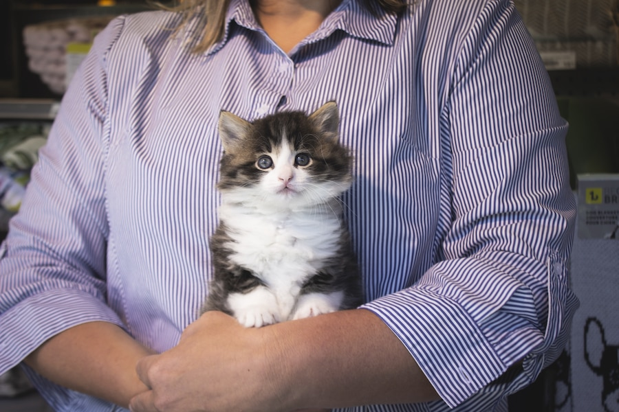 Criquet et Céline, la fondatrice de Chatons Orphelins Montréal. Céline a demandé qu'on ne dévoile pas son visage dans le cadre de ce reportage puisqu'elle voulait que l'attention soit concentrée sur les chats.
