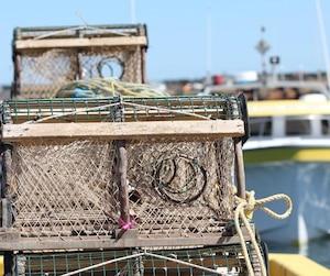 Cette nouvelle mesure toucherait des pêcheurs de crabes et de homards.