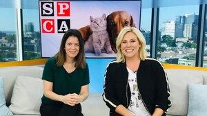 Le Québec, triste champion en abandon d'animaux