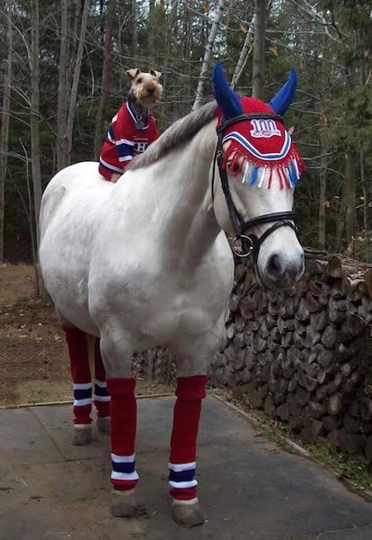 Mon cheval est une femelle et se nomme Gaïa. Mon chien est un petit garçon et se nomme Happy. Audrey David