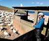 David Pelletier, enseignant en biologie au Cégep de Rimouski et étudiant au doctorat à l'UQAR, en train d'étudier les fous de Bassan au parc national de l'Île-Bonaventure-et-du-Rocher-Percé.