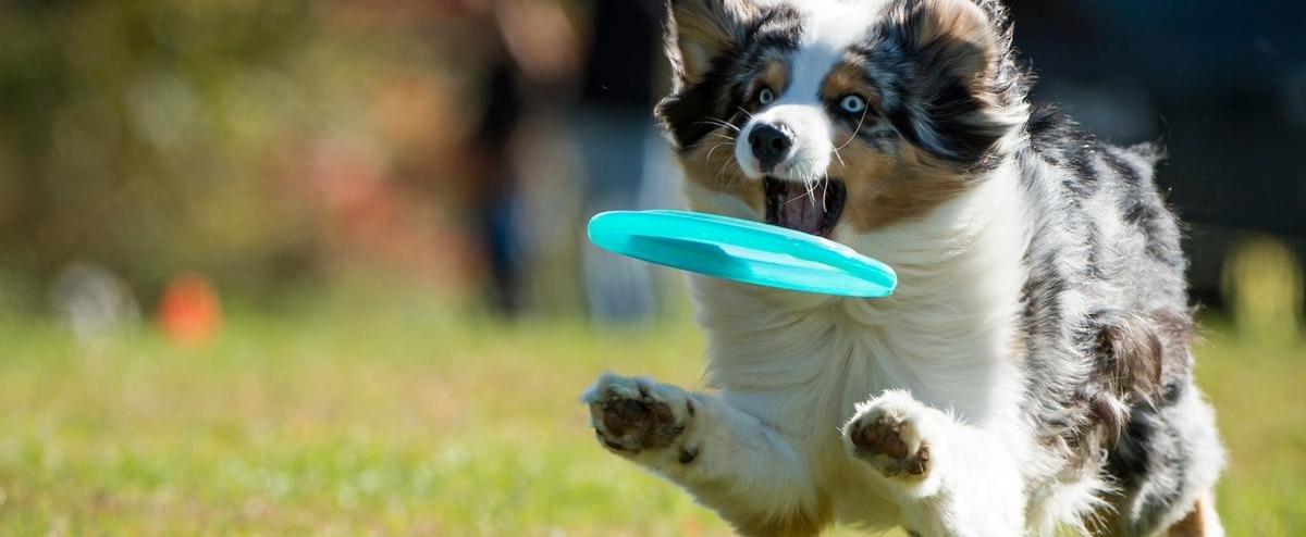 [PHOTOS] Leurs chiens sont des meilleurs au monde