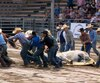 Le cheval Grady a été amené d'urgence après sa chute. Il est mort quelques heures plus tard.