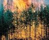 Le risque de feu de forêt comme celui-ci est considéré extrême en ce moment dans des régions du sud et de l'ouest du Québec.