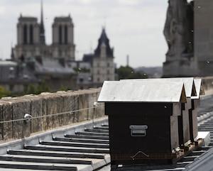 FRANCE-HONEY-PARIS