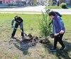 Des enfants plantent un arbre lors d'une activité de reboisement de la coopérative Arbre-évolution, à Rivière-du-Loup.