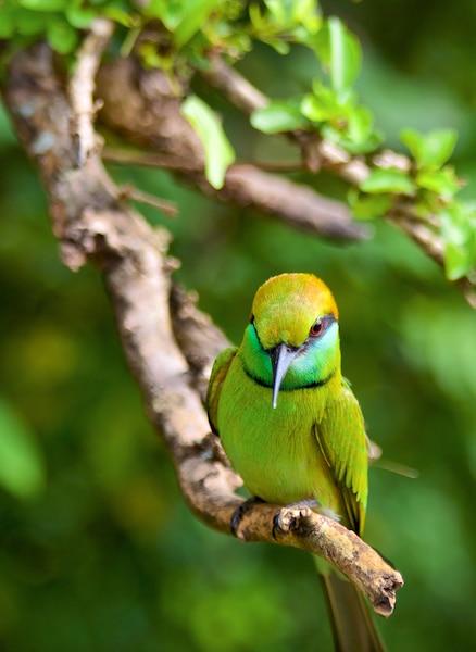 Un oiseau dans le Parc national de Yala, à Tissamaharama.