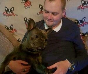Un chien meurt 15 minutes après son maître