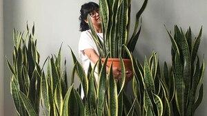 Image principale de l'article 8 plantes d'intérieur «pas tuables»