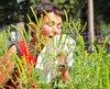 Autour de 800 000 Québécois souffrent d'allergies causées par l'herbe à poux.