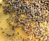 FRANCE-BEEKEEPING-INSECTICIDE-CRUISER