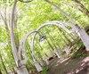 Le jardin d'ombre en forêt est une cathédrale à ciel ouvert sous les arbres. Les portes ont été fabriquées à partir de fenêtres recyclées d'une église ancestrale. L'été, à la brunante, les lucioles chantent en chœur dans la cathédrale.