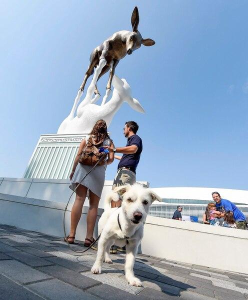 ur deux pattes ou quatre pattes, les visiteurs étaient nombreux à admirer La rencontre, un bronze de 11 mètres représentant deux cerfs de Virginie. Les auteurs de l'œuvre d'art se sont dits très heureux de l'accueil réservé par la population.