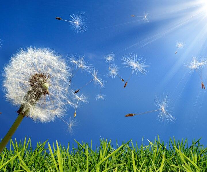 Allergies saisonnières : comment réduire les symptômes?