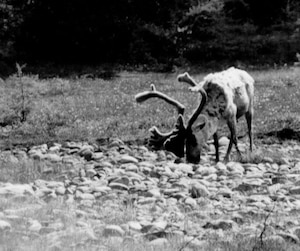 Le caribou forestier fait beaucoup parler de lui présentement au Québec. Avant de prendre une décision dans ce dossier, le ministre Blanchette veut écouter tous les intervenants présents à la table de concertation.