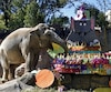 Trompita l'éléphante savourant son gâteau d'anniversaire