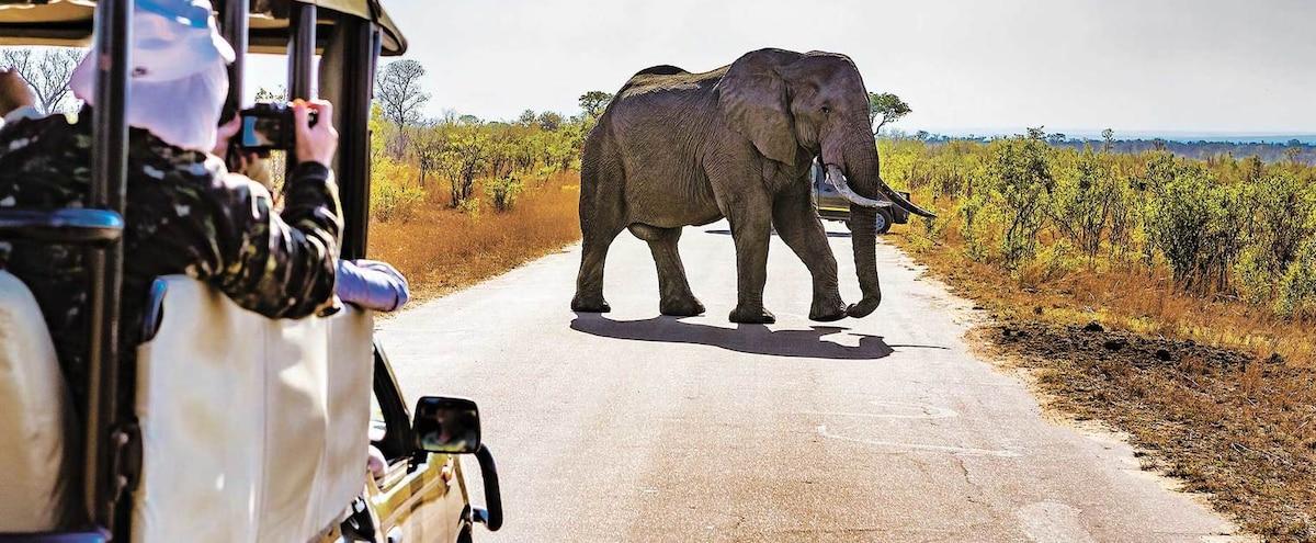 Se préparer pour un safari