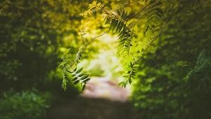 6 gestes verts à intégrer dans votre quotidien
