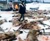 Des chasseurs de la Montérégie ont été estomaqués de voir que deux chasseurs avaient abattu à eux seuls près de 80 bêtes.
