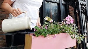 Image principale de l'article Ces boîtes à fleurs rendront vos voisins jaloux