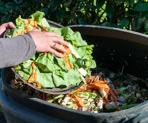 Compost compostage