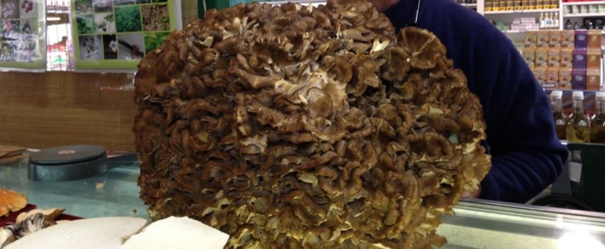 Un champignon de 20 kg trouvé en forêt | JDM