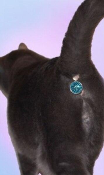 Image principale de l'article Un bijou qui cache l'anus de votre chat
