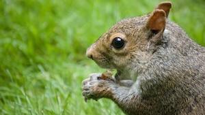 Il donnait de la meth à son écureuil