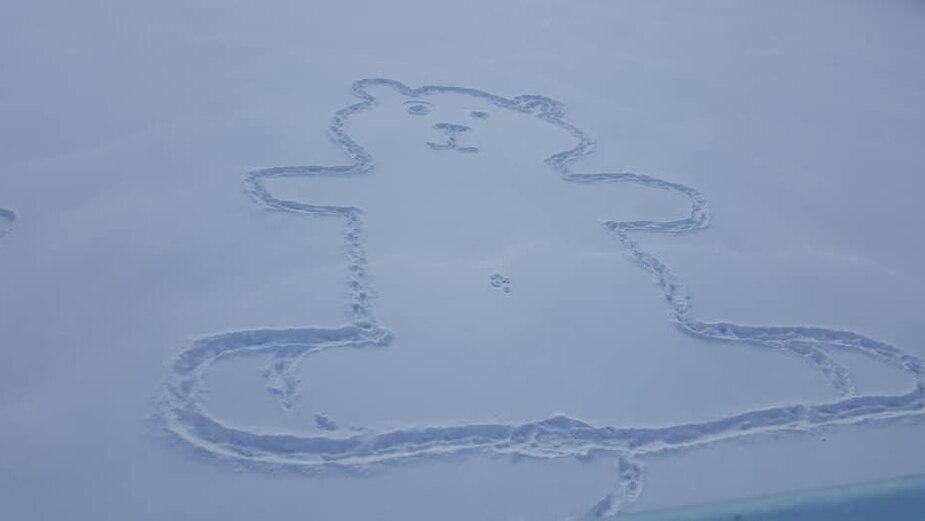 Image principale de l'article Comment le nombril de l'ours a-t-il été fait?
