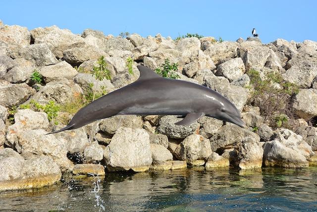 Il est possible de nager avec des dauphins sur le site.