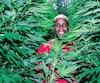 Amélie Chevalier et Ernst Jr St-Cyr (sur la photo) cultivent tout à fait légalement une petite, mais spectaculaire plantation de cannabis thérapeutique derrière leur bungalow.