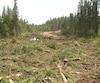 Ces coupes forestières ont été faites en milieu humide au cœur du territoire atikamekw sans consultation ni consentement. En activité depuis trois semaines, la compagnie avance à grande vitesse et fait grimper la grogne chez les autochtones.