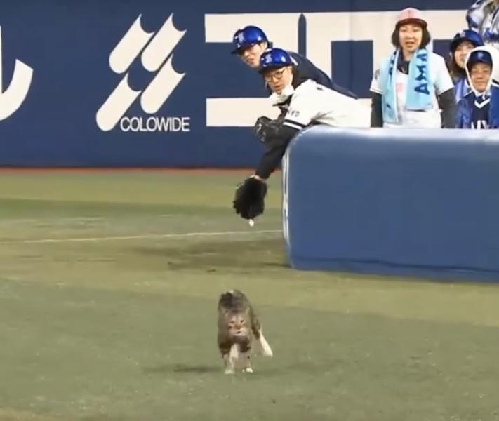 Un chat interrompt un match de baseball
