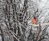 Certains arbres n'ont pas supporté le poids de la glace et des branches se sont cassées, ce qui a nécessité le travail d'émondeurs.