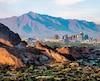 La ville de Phoenix est située en plein cœur du désert de Sonora.