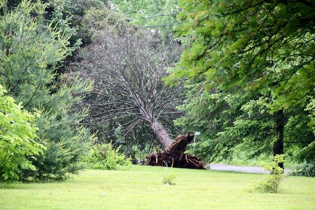 Un arbre a été déraciné sur le rang 8 à Mont-Laurier.