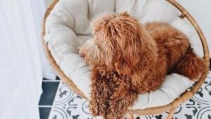 Image principale de l'article C'est le grand retour des chaises papasan!