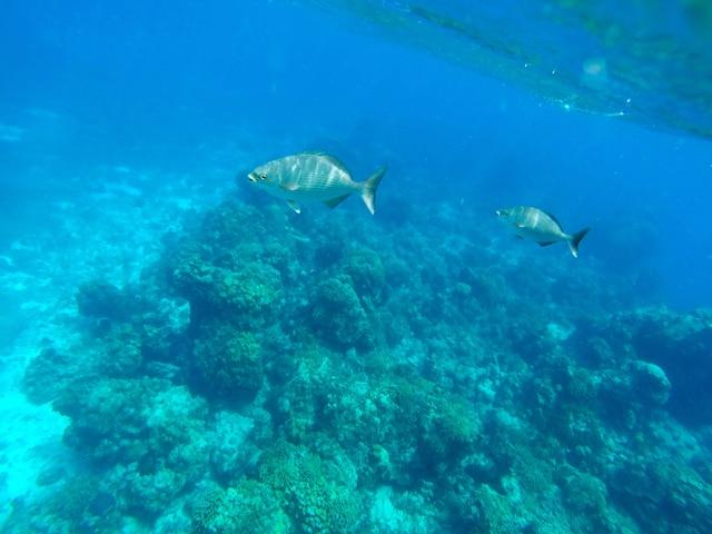 L'hôtel offre des forfaits de plongée sous-marine et en apnée.