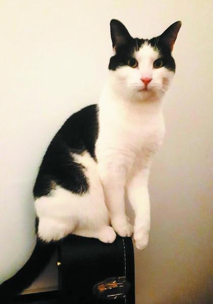 George Michael, le chat de Jacynthe Cardin.
