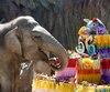 GUATEMALA-ZOO-ELEPHANT-TROMPITA-BIRTHDAY