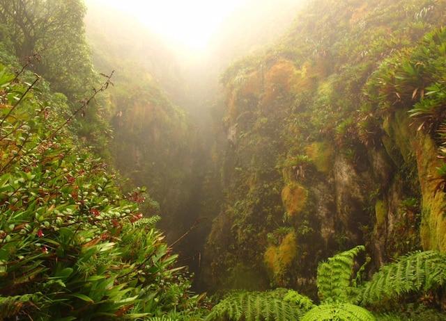 L'éboulement Faujas, paysage extraordinaire sur un flanc de la Soufrière (Guadeloupe) qui témoigne d'une ancienne éruption, entièrement recouverte de mousses et de lichens multicolores. C'est aussi le lieu de la Grande Faille.