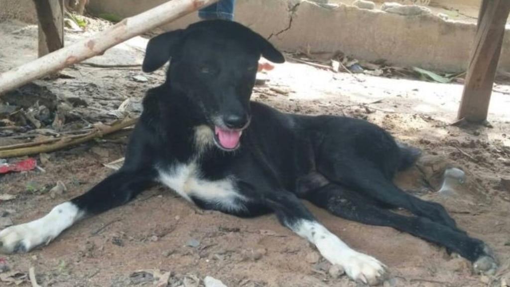 Thaïlande: un chien salué en héros pour avoir sauvé un bébé