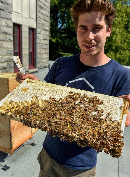 Sur le toit du Collège Saint-Charles-Garnier, il y a 60000abeilles. Au début de la  saison, en juin, il y en avait 10000.Gabriel Gagnon Anctil est apiculteur pour l'entreprise Alvéole, qui installe des ruches en milieu urbain à des fins éducatives.