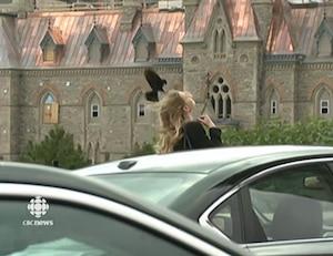 Un oiseau attaque des gens au Parlement