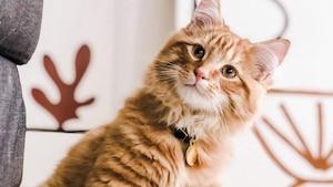 Un nouveau café végan où adopter des chats