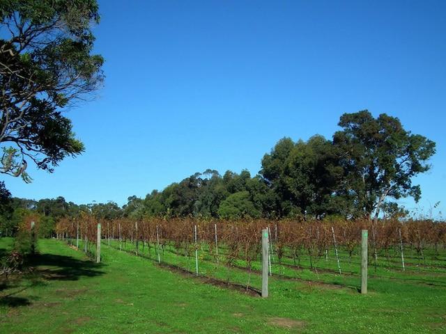 Les vignobles de Margaret River en automne