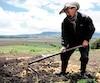 Un paysan colombien cultive des pommes de terre plus nutritives pour la production de semences.